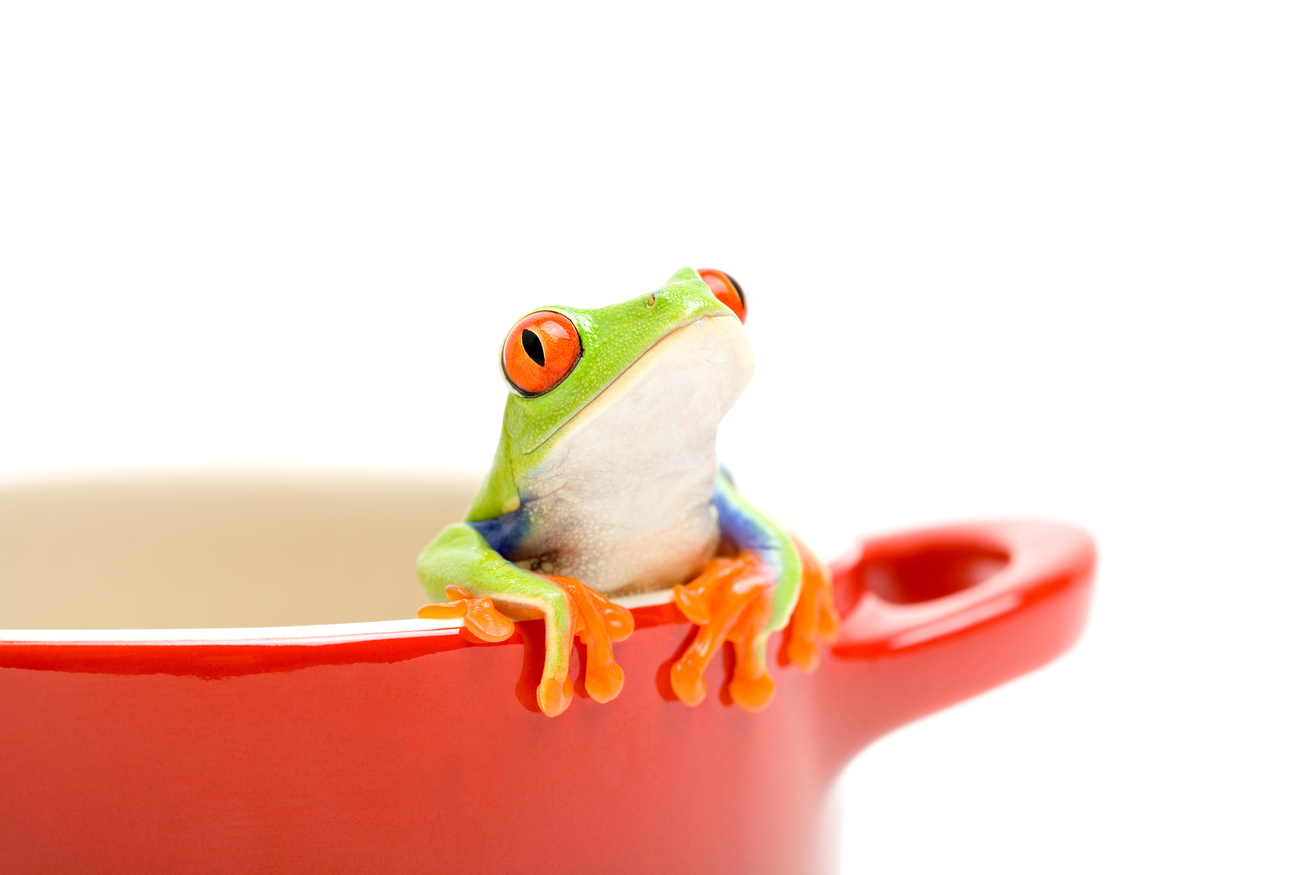 Frog on Cup
